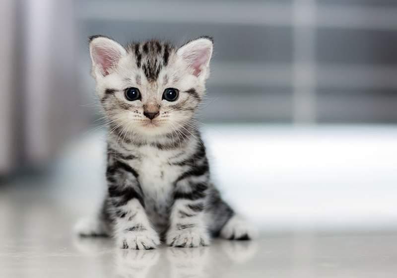 İlk Defa Kedi Sahiplenecekler İçin Öneriler